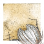 Snyders Re-Dux #26, 2012, Graphite and Colored Pencil on Digitally Manipulated Archival Print, 3 x 3 inch (7.62 x 7.62 cm) Plus Extended Drawing